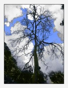 אשר גייבל - עץ ושמים
