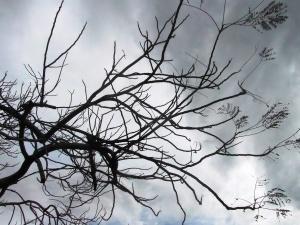נורית צדרבוים - העץ כמתווך בין שמיים וארץ (2)