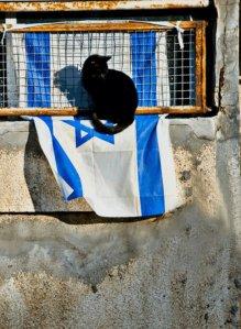 מידד גוטליב - חתול ודגל
